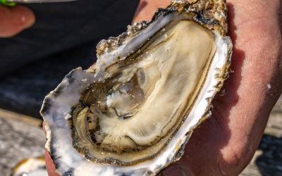 Pour les fêtes, dégustez les huîtres du Marais Breton Vendéen